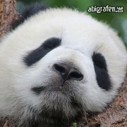 Panda- sich für die Schule schminken