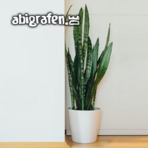 Zimmerpflanze: Bogenhanf
