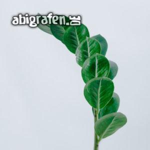 Zimmerpflanze: Glücksfeder